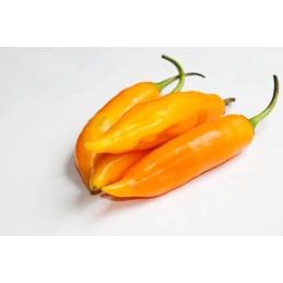 Aji Amarillo CHF 11.00 el kilo a la compra de 5 Kilos