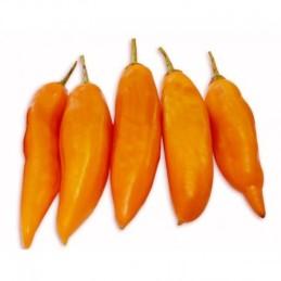 Piment Aji Amarillo CONGELES 1 KILO
